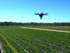 Former Queensland farmer Nathan Roy invents drone to spread predatory insects over farmland